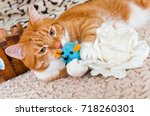 Stock photo red cat is playing with his toy mouse 718260301