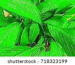 green leaves and branch  garden ... | Shutterstock . vector #718323199