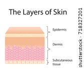 the layer of skin vector... | Shutterstock .eps vector #718327201