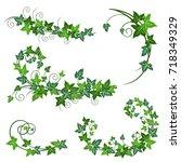 ivy vines. realistic vector... | Shutterstock .eps vector #718349329