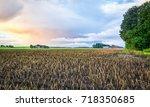 Swedish Destroyed Harvest In...