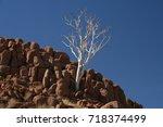 Small photo of Namibian Rocky Desert tree