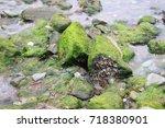 green algae on some rocks in... | Shutterstock . vector #718380901