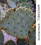 Small photo of Close up Heart shaped prickly pear cactus aglow in sunset light in the Tucson Arizona desert