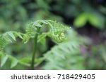 select focus  a fern of the