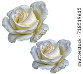 Stock photo rose on white background flowers isolated stylization watercolor 718519615