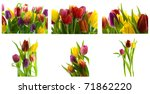 collage of colorful  tulips on... | Shutterstock . vector #71862220