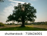 Large Oak Tree With Sun Flare