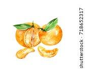 watercolor mandarin. hand drawn ... | Shutterstock . vector #718652317