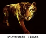 Tiger Comming From The Dark