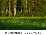 green grass and flowers on... | Shutterstock . vector #718674169