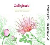 exotic plants. mimosa. vector... | Shutterstock .eps vector #718682521