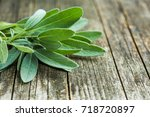salvia officinalis. sage leaves ... | Shutterstock . vector #718720897