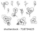 graphic hand drawn set of small ... | Shutterstock .eps vector #718734625