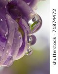 Drop With Reflection Of Violet...