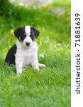 Stock photo puppies 71881639