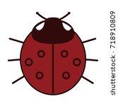 ladybird on white background .... | Shutterstock . vector #718910809
