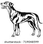 Stock vector decorative contour portrait of dog standing in profile german pinscher standart vector isolated 719048599