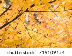 yellow maple leaves | Shutterstock . vector #719109154