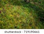 moss in the  wild wood   Shutterstock . vector #719190661