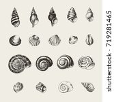 ink drawn seashells and snails | Shutterstock .eps vector #719281465