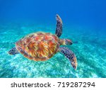 Sea Turtle Swims In Sea Water....