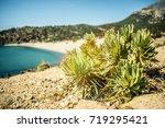 exotic island vegetation plans... | Shutterstock . vector #719295421