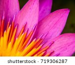 Pollen And Petals Of Blossom...