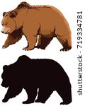 bear colored and black... | Shutterstock .eps vector #719334781