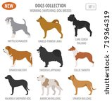 working  watching dog breeds  ... | Shutterstock .eps vector #719364319