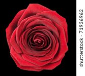 Red Rose Flowerhead Isolated on Black Background. Top View on Big Red Rose Flower - stock photo