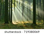 morning in the forest | Shutterstock . vector #719380069