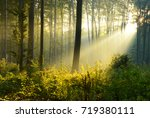 morning in the forest | Shutterstock . vector #719380111