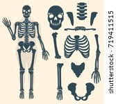 Human Skeleton With Different...