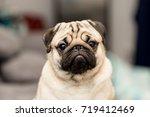 Cute Dog Pug Breed Have A...