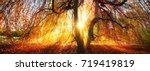 golden rays of the autumn sun... | Shutterstock . vector #719419819