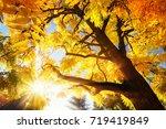 the bright autumn sun... | Shutterstock . vector #719419849