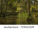 Bayou In Honey Island Swamp.