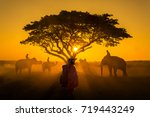 silhouette asain young elephant ... | Shutterstock . vector #719443249