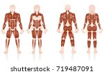 male and female muscles   large ... | Shutterstock .eps vector #719487091
