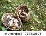 Basket With Mushrooms. Autumn...