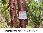 grand cayman island   august 18 ... | Shutterstock . vector #719510971