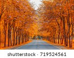 beautiful leaves wood change... | Shutterstock . vector #719524561
