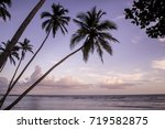 palm trees in a beach in the... | Shutterstock . vector #719582875