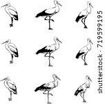 black and white stork  bird...   Shutterstock .eps vector #719599195