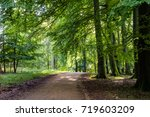 Path Under A Beech Tree In The...