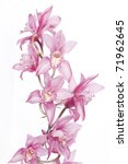 Beautiful Pink Orchid Isolated...