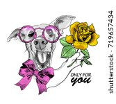 vector white dog with pink bow  ...   Shutterstock .eps vector #719657434