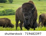 This impressive American Bison Portrait illustrates its sheer size and power. Photographed on the Kansas Maxwell Prairie Preserve.  - stock photo