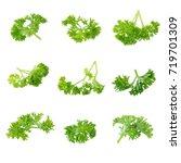 fresh branch of green parsley... | Shutterstock . vector #719701309